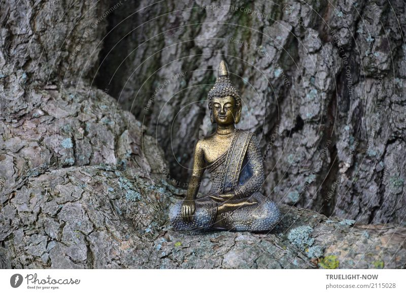 Small Buddha sitting on the root of a mighty oak tree Happy Healthy Alternative medicine Wellness Harmonious Well-being Contentment Relaxation Calm Meditation