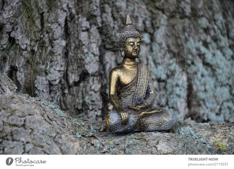 Timeless. is still sitting Lifestyle Happy Beautiful Wellness Harmonious Well-being Contentment Calm Meditation Art Sculpture Culture Nature Tree Relaxation
