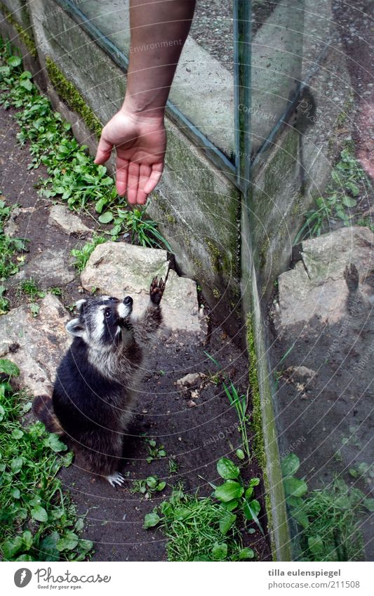Hand Vacation & Travel Animal Together Wait Arm Help Hope Tourism Observe Zoo Curiosity Concentrate Wild animal Cute