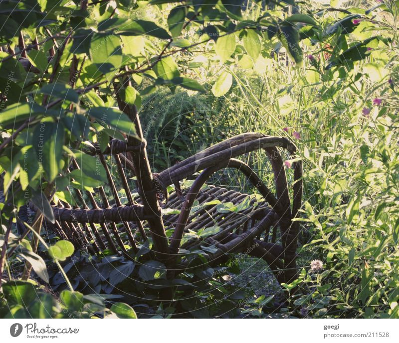 empty chair Chair Garden chair Rocking chair Nature Plant Summer Beautiful weather Flower Grass Bushes Blossom Foliage plant Wood Old To enjoy To swing Dream