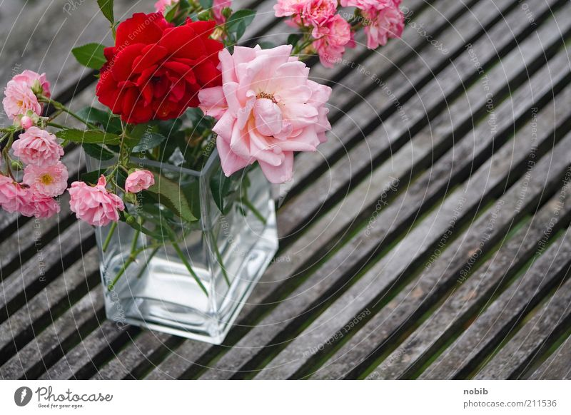 pink Fragrance Summer Plant Flower Rose Decoration Bouquet Glass Esthetic Happy Thorny Pink Red Emotions Romance Colour photo Exterior shot Close-up Deserted