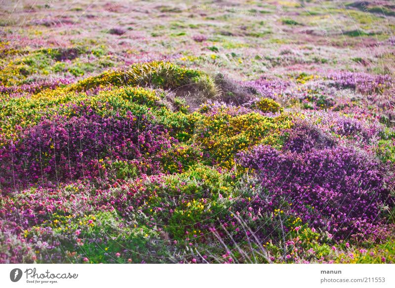 Nature Flower Plant Summer Yellow Meadow Autumn Blossom Landscape Pink Closed Bushes Violet Fantastic Blossoming Beautiful weather