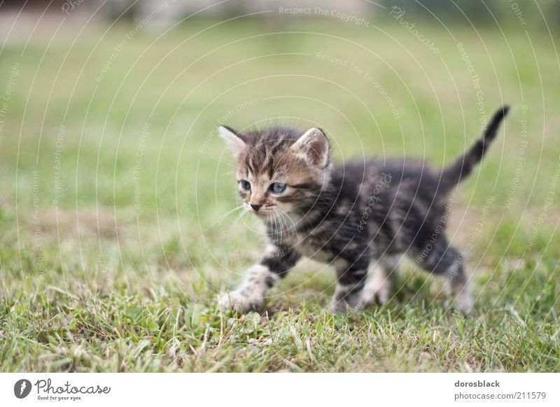le petit chat . Nature Garden Meadow Animal Pet Cat 1 Baby animal Cuddly Curiosity Cute Warmth Brown Green Colour photo Subdued colour Exterior shot Close-up