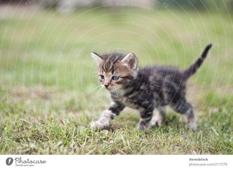 Nature Beautiful Green Animal Meadow Grass Garden Cat Warmth Brown Small Animal face Pelt Curiosity Cute Pet