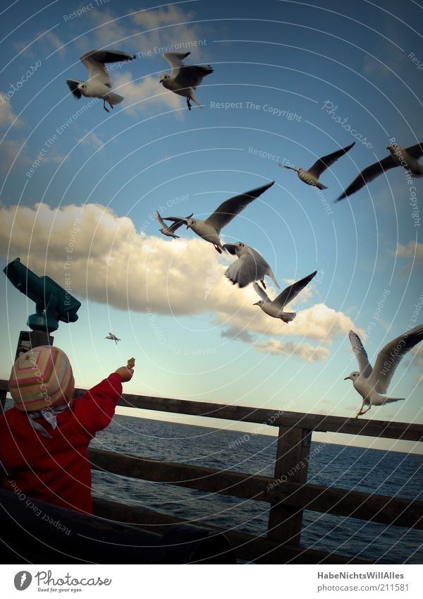 Human being Child Blue Water Vacation & Travel White Ocean Animal Clouds Autumn Coast Small Bird Infancy Flying Natural