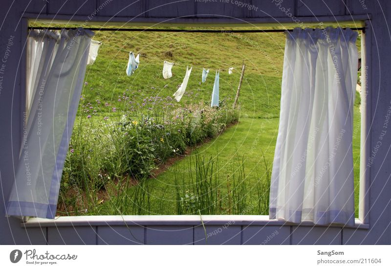 Nature Green White Plant Summer Relaxation Loneliness Flower Window Meadow Grass Wood Garden Dream Room