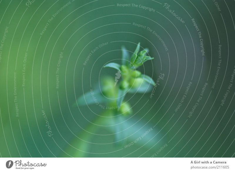 Nature Green Plant Summer Calm Leaf Blossom Grass Fog Elegant Environment Free Cool (slang) Growth Bushes Climate