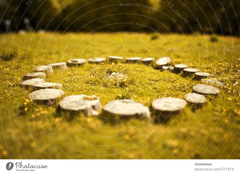 Who cut off Stonehenge? Landscape Tree Grass Wood Yellow Green Idyll Colour photo Subdued colour Exterior shot Deserted Day Blur Tree stump Logging Round Circle
