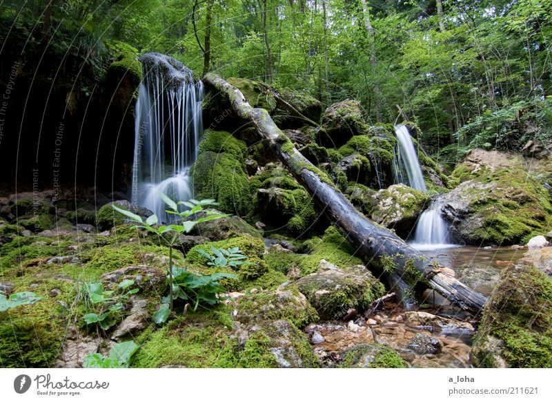 nature 5.5 Calm Mountain Elements Water Drops of water Summer Plant Tree Moss Forest Rock Alps Brook Waterfall Dream Growth Authentic Fluid Clean Green