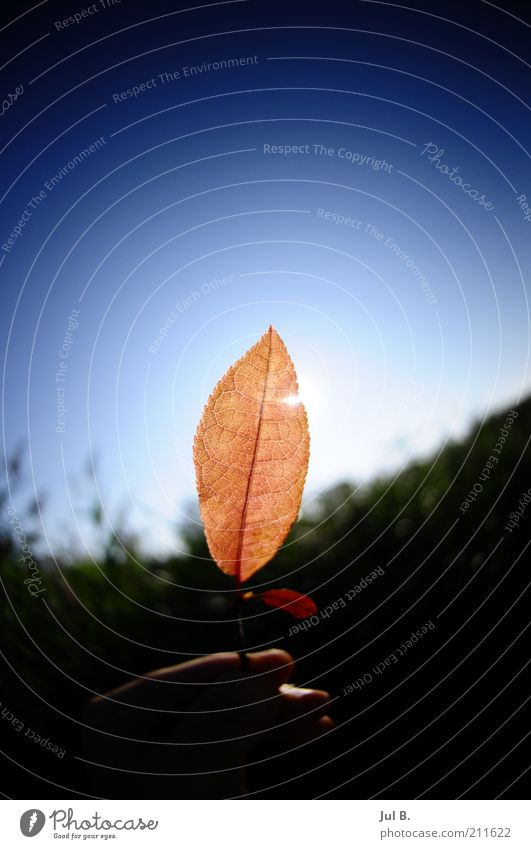 Sky Nature Beautiful Hand Joy Leaf Beautiful weather Fingers Stop Enthusiasm Translucent Plant