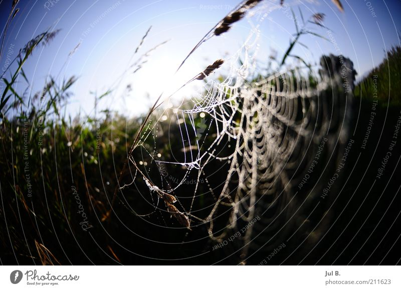 Nature Beautiful Calm Emotions Grass Beautiful weather Blue sky Spider Spider's web Environment