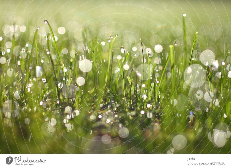shine on Nature Plant Drops of water Sunlight Beautiful weather Grass Meadow Fantastic Fresh Natural Power Sustainability Colour photo Exterior shot Detail
