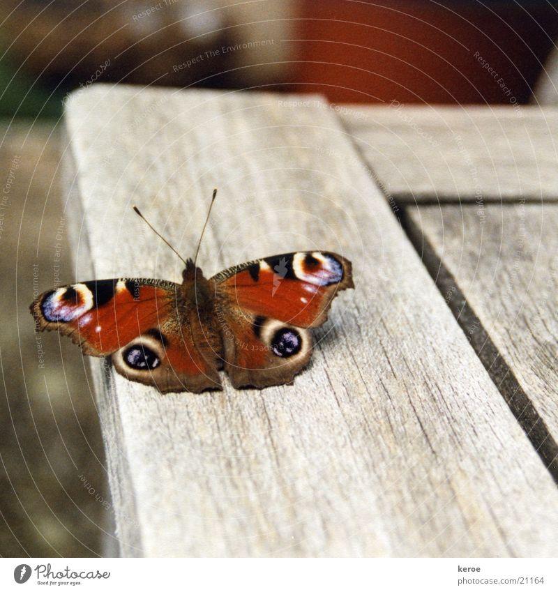 runway Butterfly Peacock butterfly Wood Wing