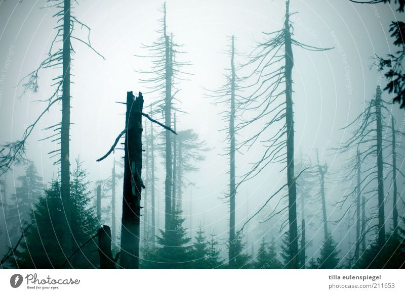 Nature Blue Tree Loneliness Forest Autumn Cold Dark Environment Moody Fog Natural Transience Creepy Tree trunk Bleak