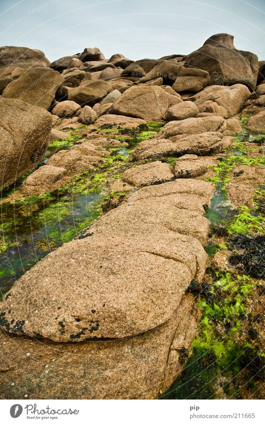rosier Nature Elements Water Seaweed Algae Rock Coast Reef Stone Brown Green Habitat Formation Stony Gravel Firm Brittany Granite Low tide Tide Colour photo