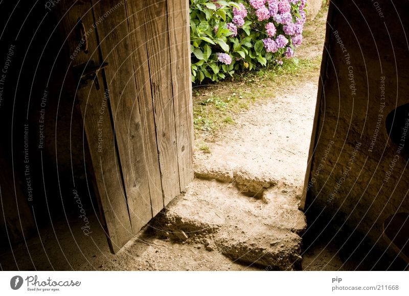 mind the gap Nature Flower Bushes Hydrangea Hut Entrance Door Stone Wood Old Brown Violet Hospitality Calm Living or residing Contentment Open Colour photo