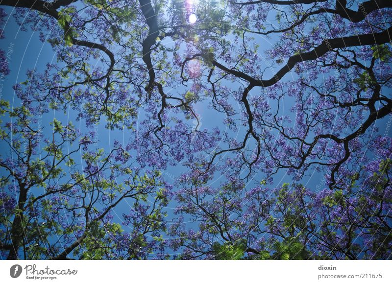 Nature Beautiful Sky Tree Green Blue Plant Summer Forest Spring Weather Environment Growth Climate Violet Branch
