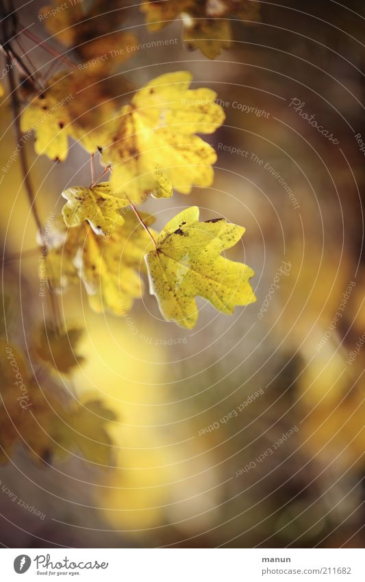 Nature Beautiful Leaf Yellow Autumn Change Transience Branch Autumn leaves Twigs and branches Autumnal Autumnal colours Early fall