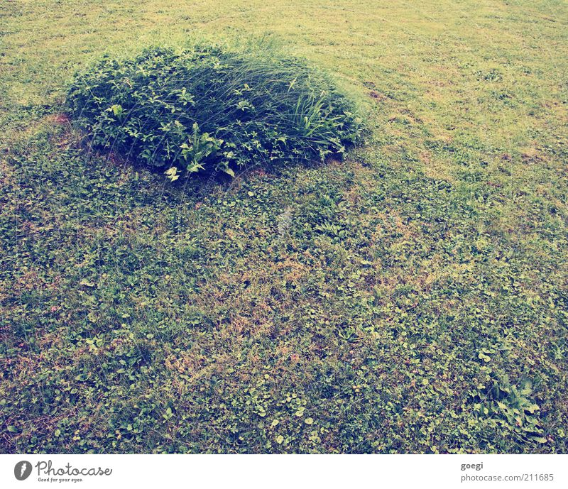island Nature Plant Earth Summer Grass Garden Circle Circular Round Soft Green Island Tuft of grass Lawn Remainder Mow the lawn lawn care Colour photo