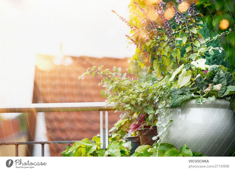 Potted flowers on balcony or terrace Lifestyle Design Vacation & Travel Summer Living or residing Flat (apartment) Garden Nature Sunrise Sunset Sunlight