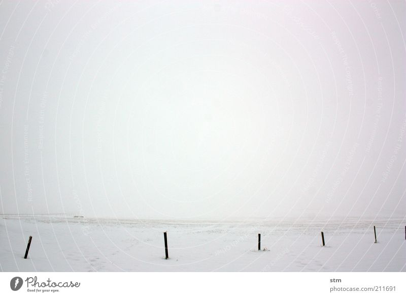 Nature White Winter Vacation & Travel Calm Loneliness Snow Meadow Freedom Landscape Ice Contentment Field Fog Weather Environment