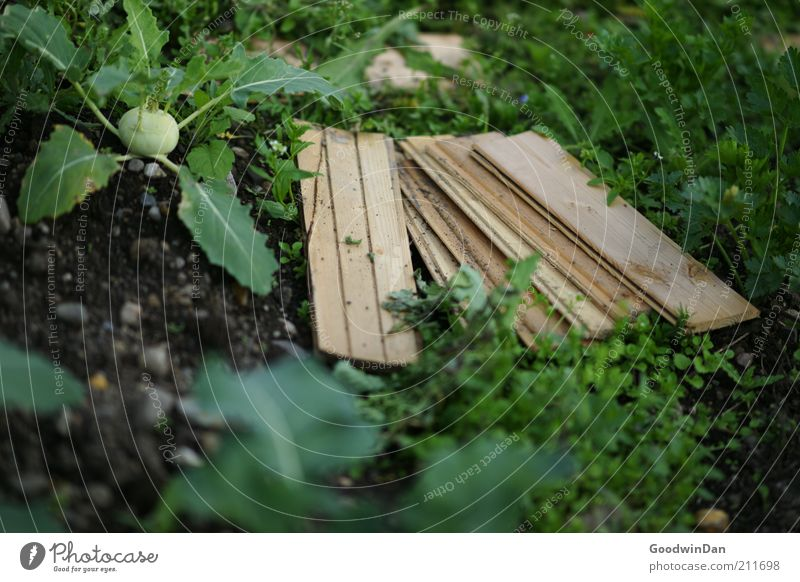 Nature Plant Nutrition Spring Garden Moody Food Environment Earth Growth Vegetable Harvest Wooden board Economy Vegetable garden