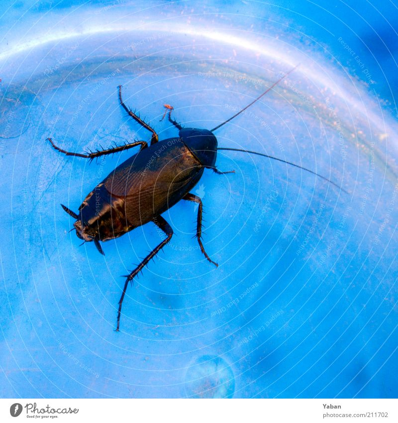 Blue Animal Legs Brown Clean Symbols and metaphors Captured Beetle Feeler Crawl Cockroaches Bucket Pests Macro (Extreme close-up) Insect destroyer