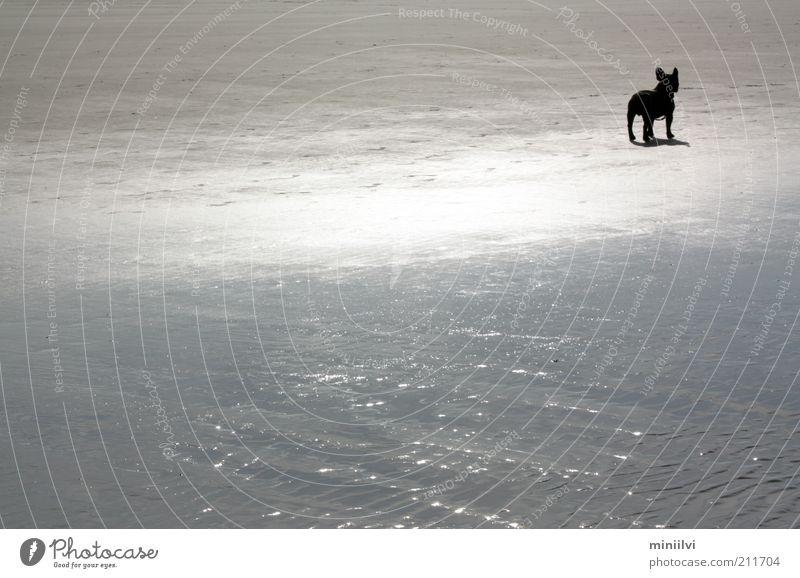Water Ocean Summer Beach Calm Black Animal Dog Sand Moody Wait Glittering Free Trip Stand