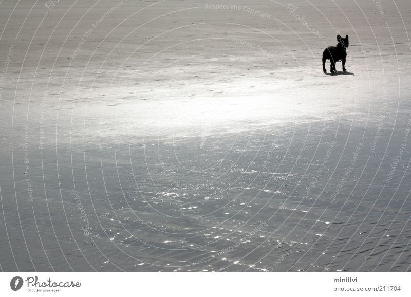 Water Ocean Summer Beach Calm Black Animal Dog Sand Moody Wait Glittering Free Trip Stand