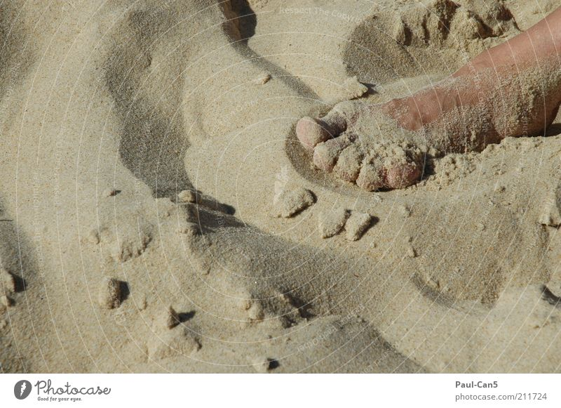 stay in bed Skin Feet Sand Summer Beach Lie Contentment Vacation & Travel Colour photo Subdued colour Exterior shot Day Calm Relaxation Toes Detail