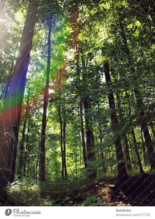 Nature Tree Green Plant Summer Leaf Forest Wood Landscape Environment Tall Climate Branch Tree trunk Treetop Rainbow