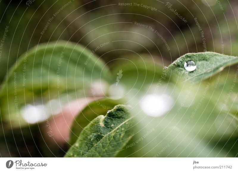 Nature Water Green Plant Summer Leaf Grass Dream Healthy Fog Wet Drops of water Fresh Europe Esthetic Round