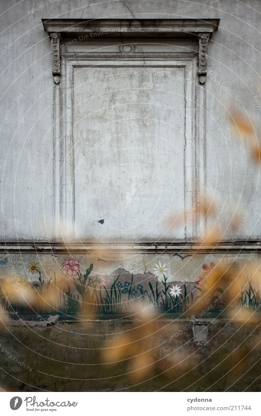 Flower Calm Loneliness Life Wall (building) Window Dream Sadness Wall (barrier) Architecture Time Facade Closed Empty Lifestyle Esthetic