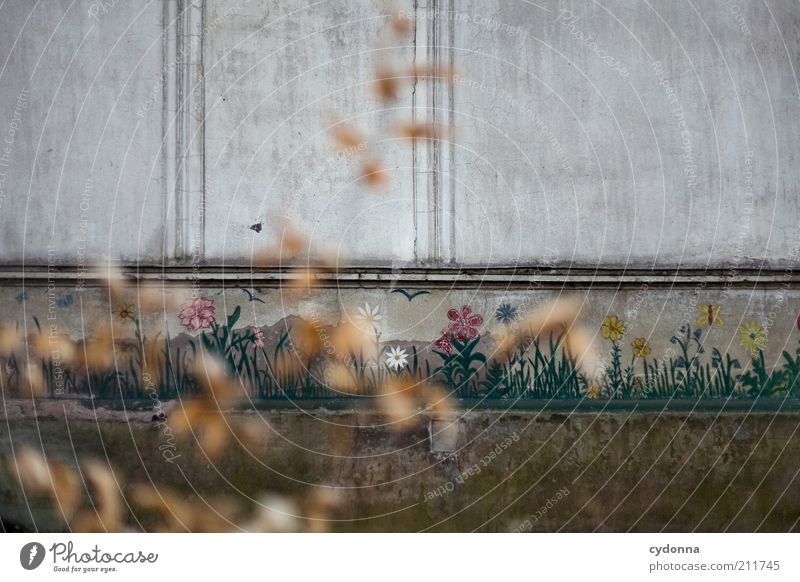 Flower Calm Loneliness Life Autumn Wall (building) Spring Dream Sadness Wall (barrier) Architecture Design Time Facade Lifestyle Hope