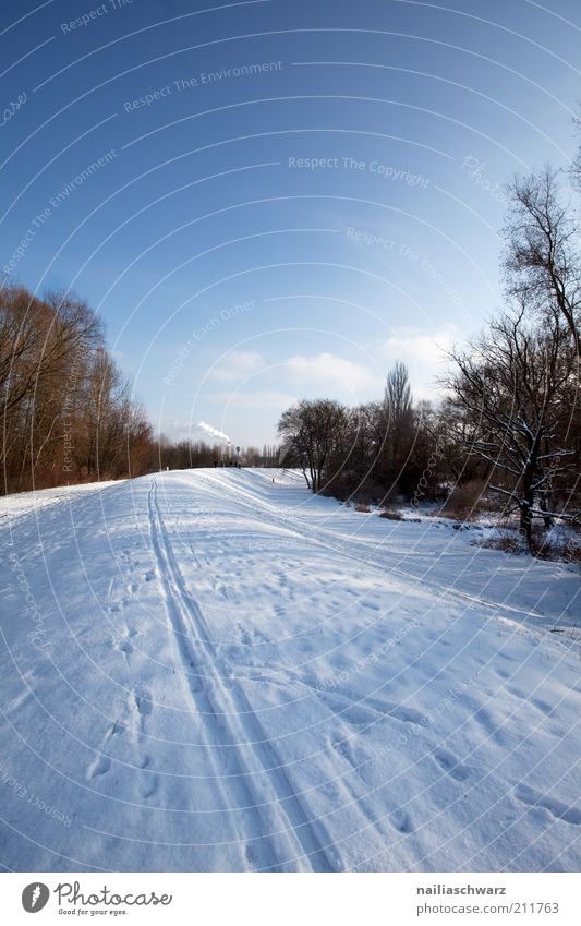 Nature Sky White Tree Blue Winter Cold Lanes & trails Landscape Brown Field Weather Environment Climate Hill Beautiful weather