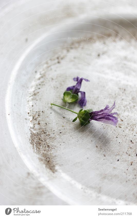 Old White Flower Plant Emotions Blossom Dream Sadness Sand Moody Dirty Lie Violet Crockery Plate Nostalgia