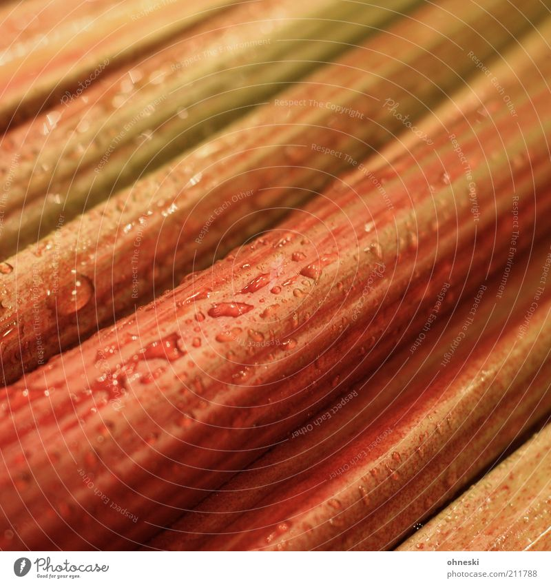 rhubarb Food Vegetable Dessert Rhubarb Nutrition Fresh Drop Drops of water Colour photo Close-up Structures and shapes Shallow depth of field Wet Damp Deserted