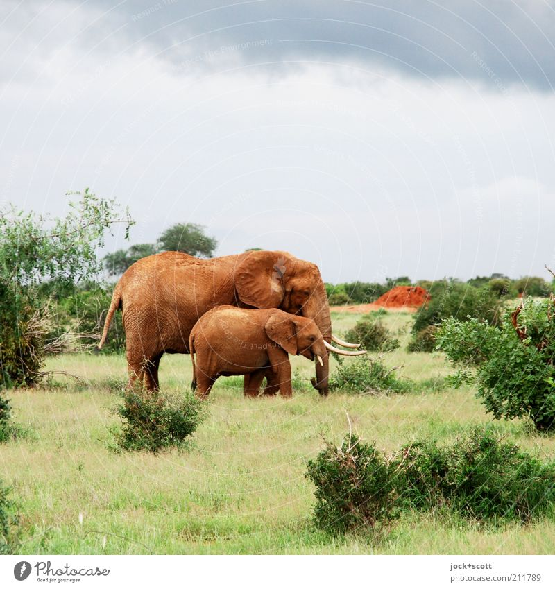 Sky Colour Animal Baby animal Warmth Grass Small Freedom Together Wild Wild animal Bushes Stand Authentic Cute Adventure