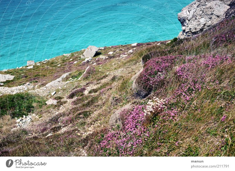 Nature Water Ocean Plant Summer Loneliness Blossom Landscape Environment Rock Earth Bushes Uniqueness Idyll Bay Moss