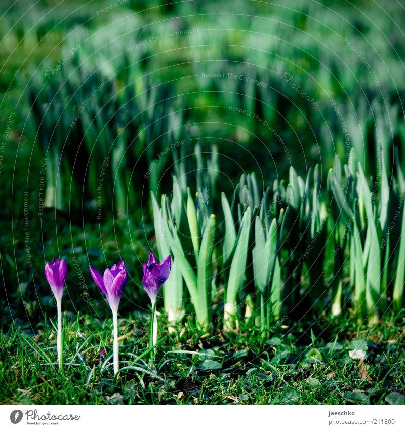 Nature Green Plant Blossom Spring Garden Park Environment Fresh Growth Climate Violet Flower Delicate Joie de vivre (Vitality) Blossoming
