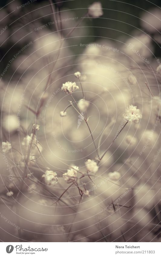 cotton balls Environment Nature Plant Spring Summer Climate Flower Bushes Blossom Park Movement Blossoming Illuminate Dream Growth Esthetic Beautiful Uniqueness