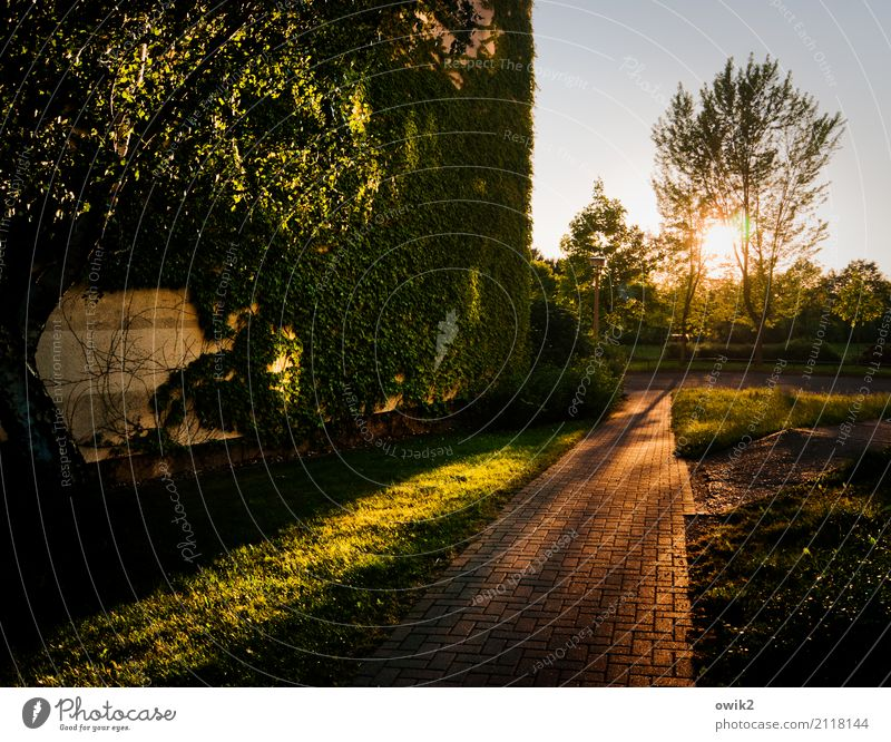 Plant Tree Landscape House (Residential Structure) Wall (building) Grass Building Wall (barrier) Germany Facade Illuminate Growth High-rise Bushes Sidewalk