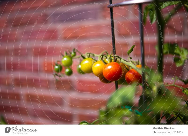 Green Red Yellow Wall (building) Garden Healthy Fruit Facade Growth Nutrition Esthetic Brick Vegetable Herbs and spices Delicious Mature