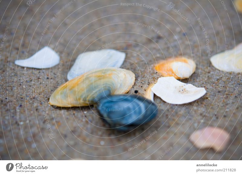 A cloudy day Vacation & Travel Trip Summer vacation Beach Environment Nature Sand Coast Mussel Mussel shell Broken Collection Search Dreary Cold Colour photo