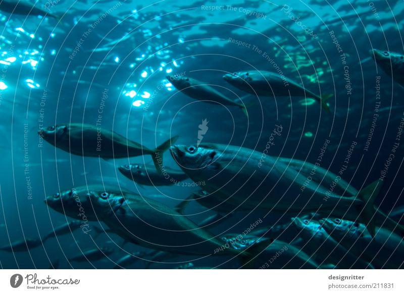 Water Ocean Calm Life Dark Fish Action Climate Clean Serene Baltic Sea North Sea Animal Environmental protection Caution