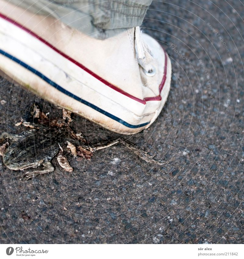 attention Street Lanes & trails Footwear Animal Wild animal Dead animal Frog 1 Asphalt Going Walking Disgust Gray White Death Level Indifference