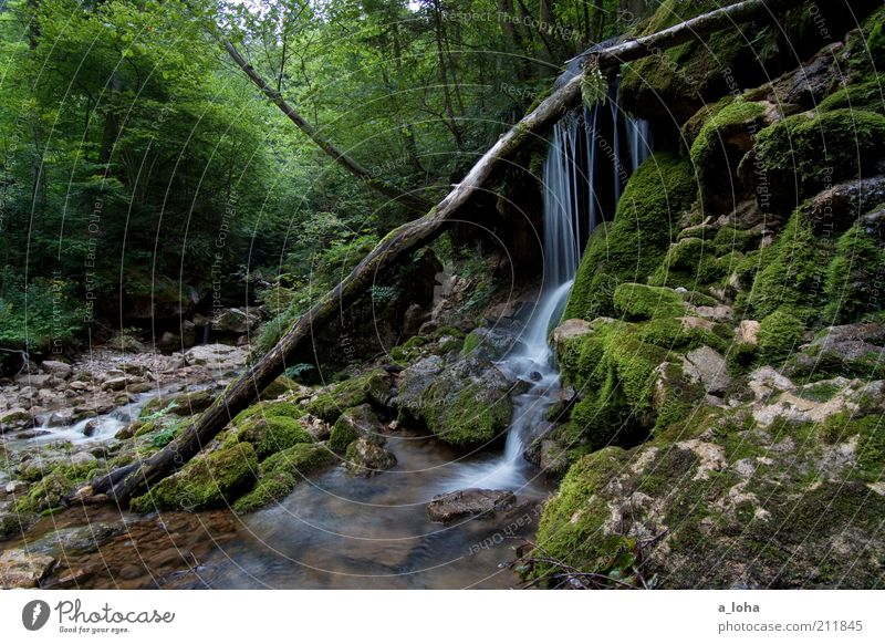 Nature Water Tree Green Plant Summer Calm Forest Mountain Movement Contentment Rock Esthetic Growth Pure Uniqueness
