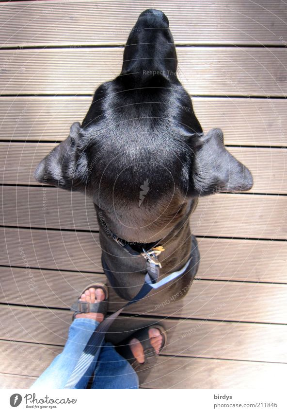 Human being Dog Animal Black Feet Glittering Sit Rope Esthetic Ear Pelt Protection Trust Watchfulness Relationship Pet