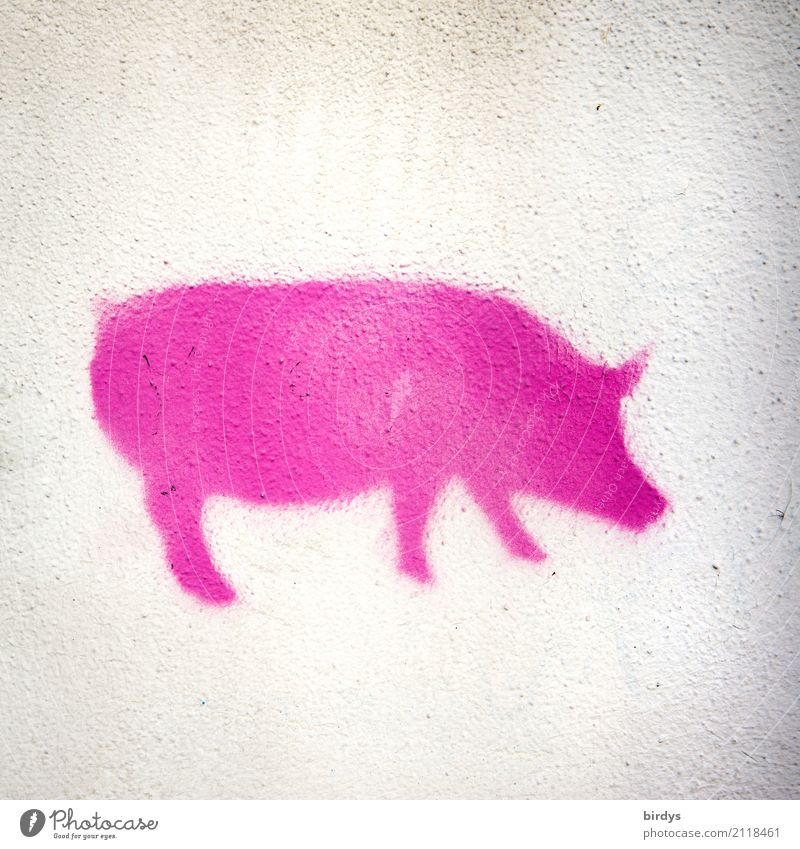 Piggy Pink Meat Nutrition Pork Overweight Medication Agriculture Forestry Farm animal Swine 1 Animal Graffiti Exceptional Exotic Friendliness Funny White