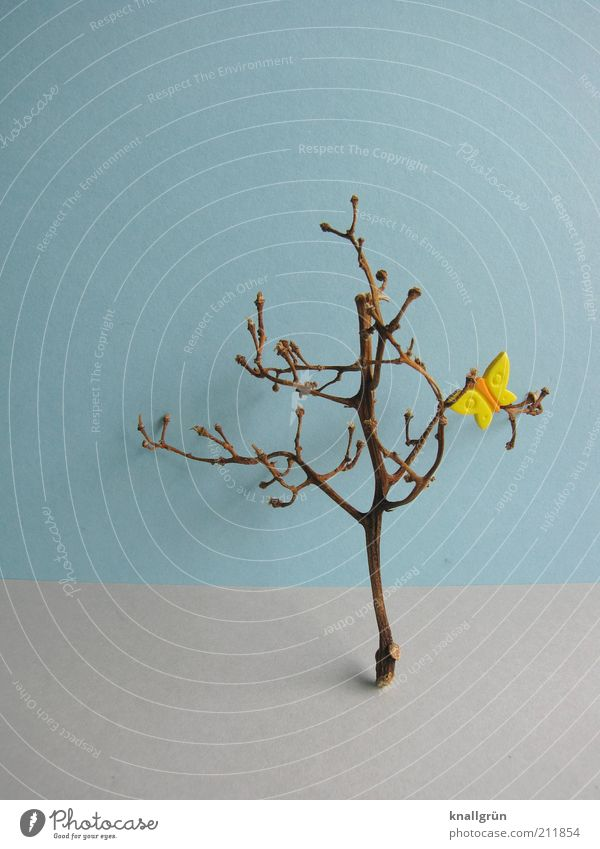 hope Plant Tree Butterfly Broken Blue Brown Yellow Gray Nature Branchage Withered Shriveled plastic butterfly Colour photo Studio shot Deserted Copy Space top
